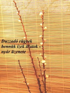 Haiga_3_Pester_Bela
